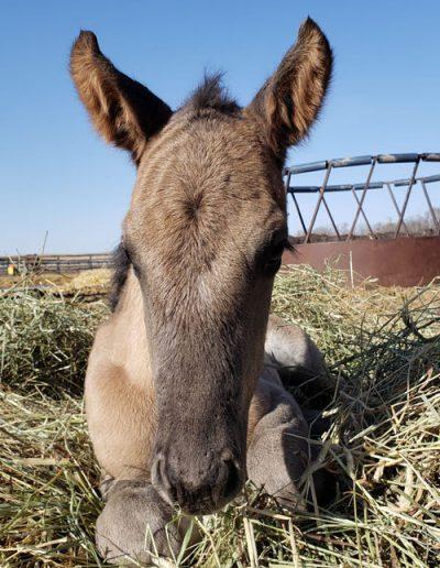 2021 Foal