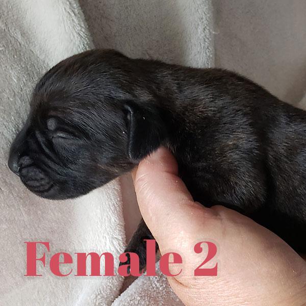 Female 2